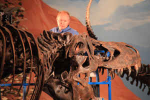 Dr Manning with a T. rex skeleton in a Utah museum