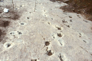 New light has been cast on dinosaur footprints