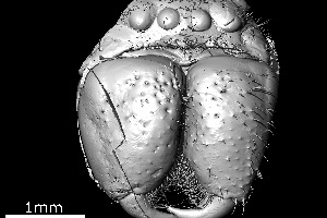The X-ray computed tomography image of the spider