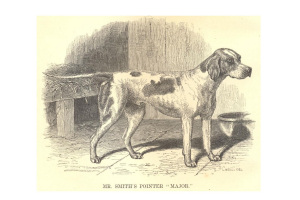 Mr Smith's Major: the first modern dog