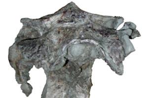 Rare braincase provides insight into dinosaur brain
