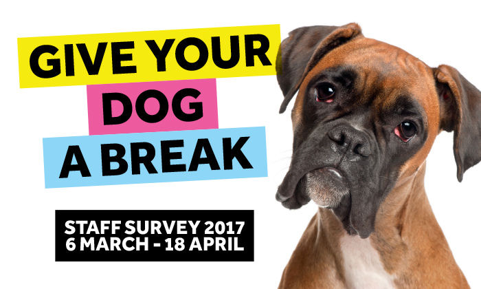 Give your dog a break