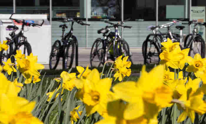 Bikes and daffodils