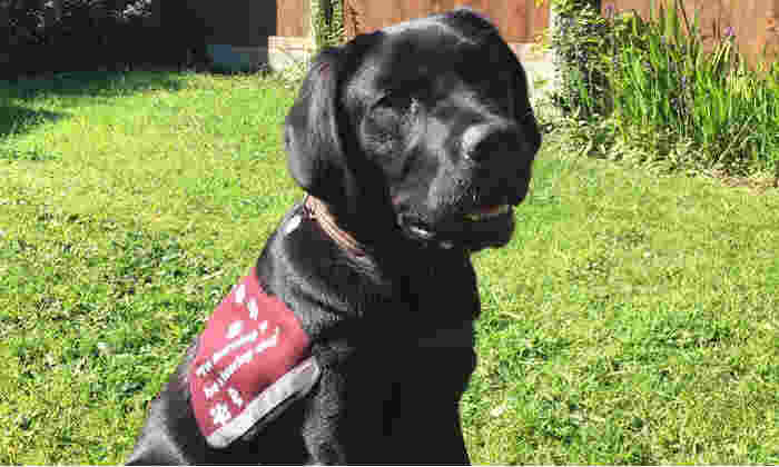Onyx the guide dog