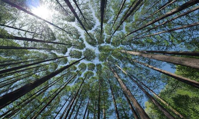 University proposal to decarbonise its investment portfolio